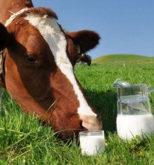 Mleko wiejskie