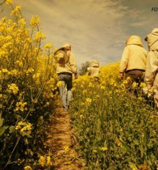 Warsztaty Pszczelarskie dla Małych i Dużych