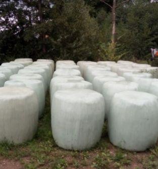 Bele sianokiszonki z lucerny