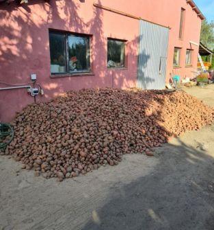 Ziemniaki Esmee