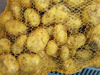 Ziemniaki Ranomi,Rudolf i Tajfun
