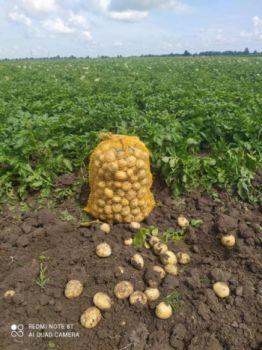 Ziemniak z dowozem na terenie powiatu bartoszyckiego,kętrzyńskiego i mrągowskiego.