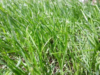 Oddam 7 ha łąk do koszenia